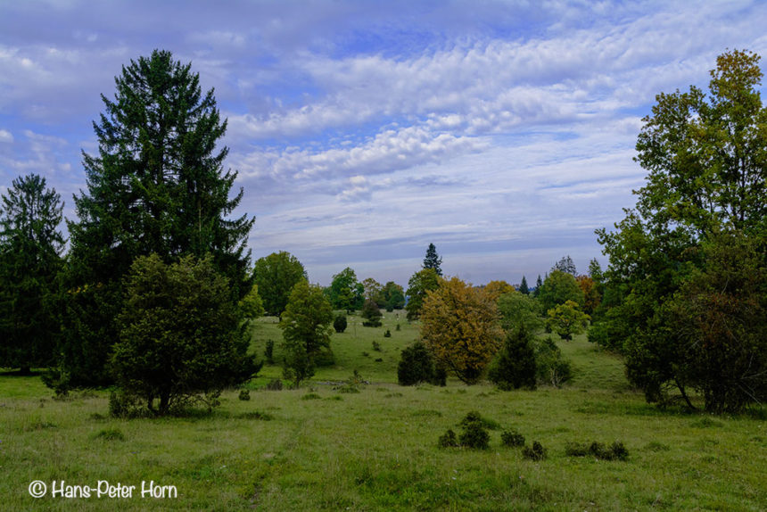 Blick auf den nördlichen Teil des Naturschutzgebietes Dellenhäule