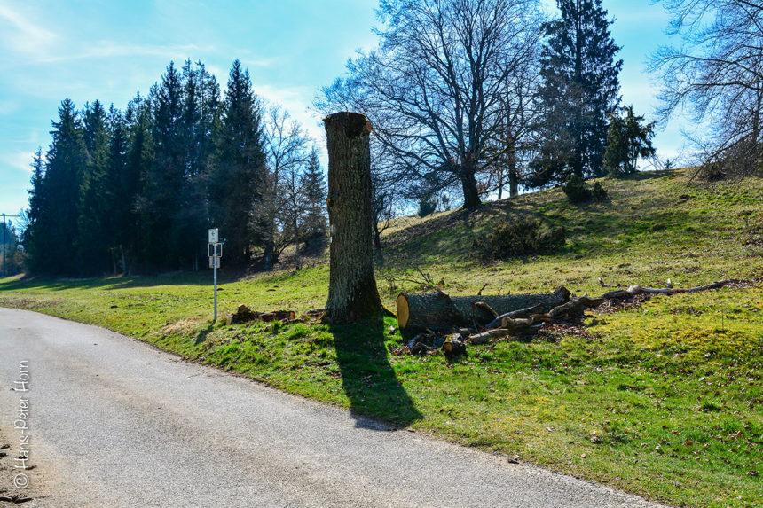 Totholz – nachher